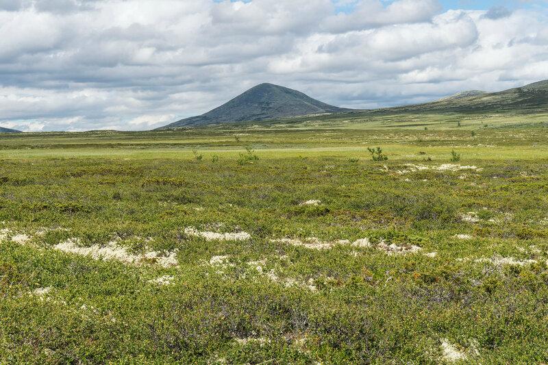 Гора Муэн над просторами болот Dørmyrin