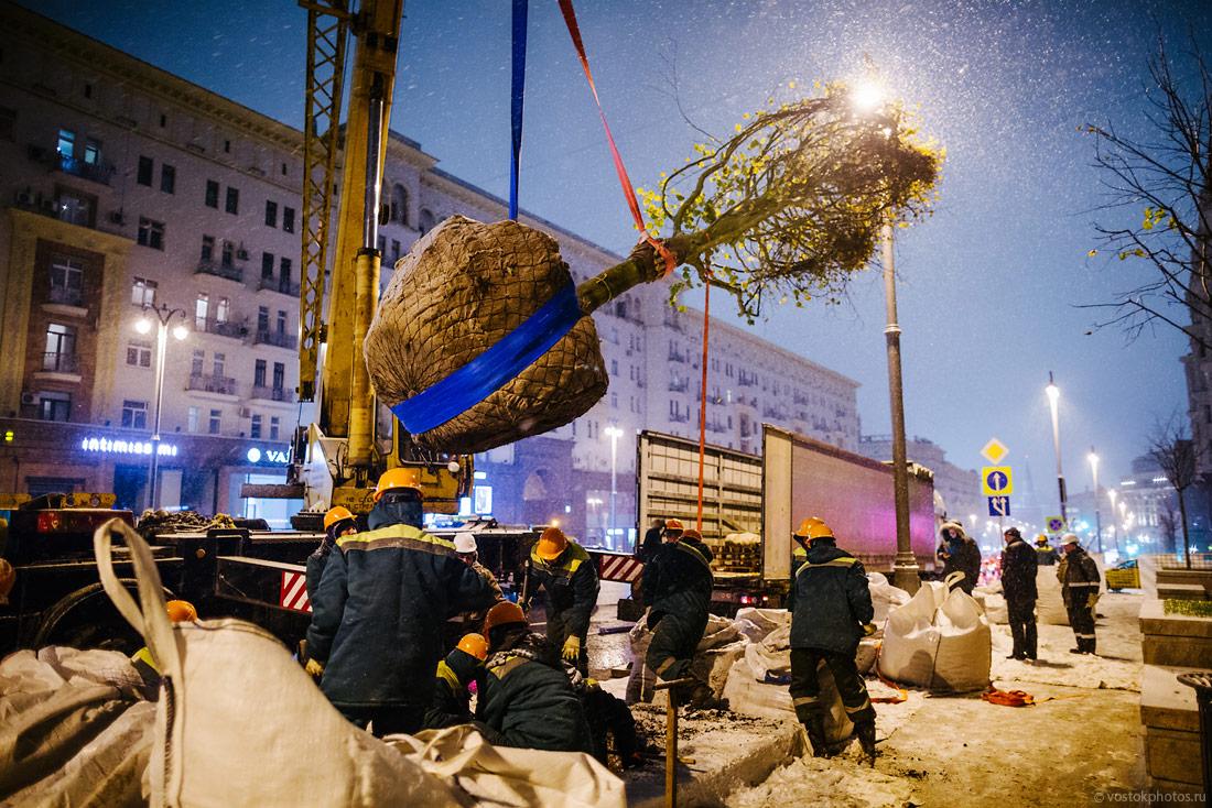 Деревья для Тверской!