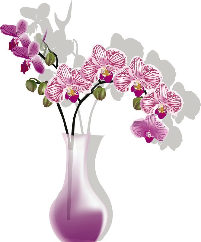orchid-raceme-pink-flower bowl-isolated-shade