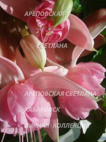 НОВИНКИ ФУКСИЙ. - Страница 5 0_153458_69799cfe_L