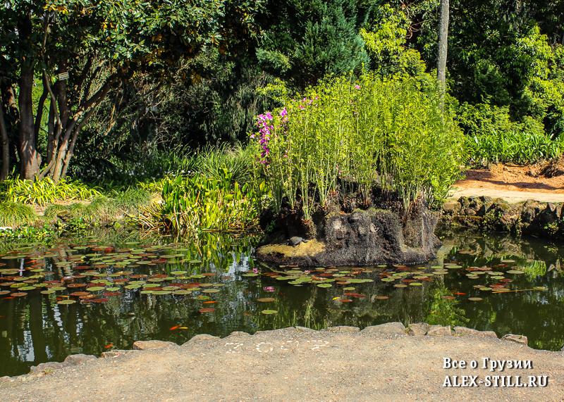 На изучение ботанического сада Батуми можно потратить весь день