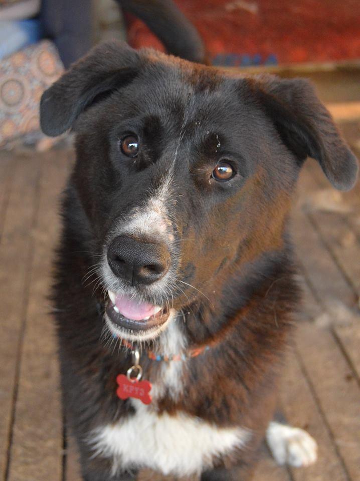 Круз собака из приюта догпорт