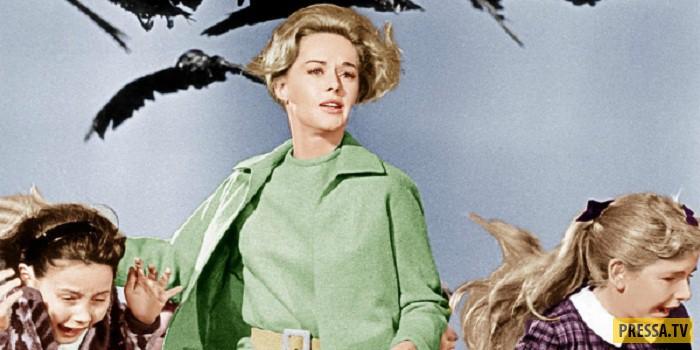 """Сцена из фильма """"Птицы"""" Следующим фильмом, оказавшимся для нее и последним, стал фильм Хичкока """"Марн"""