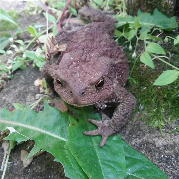 Жаба на даче