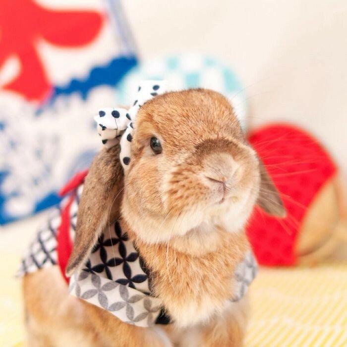 Модный кролик