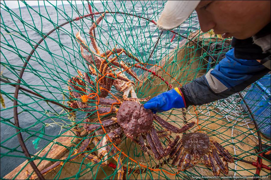 Рыбалка на камчатского краба
