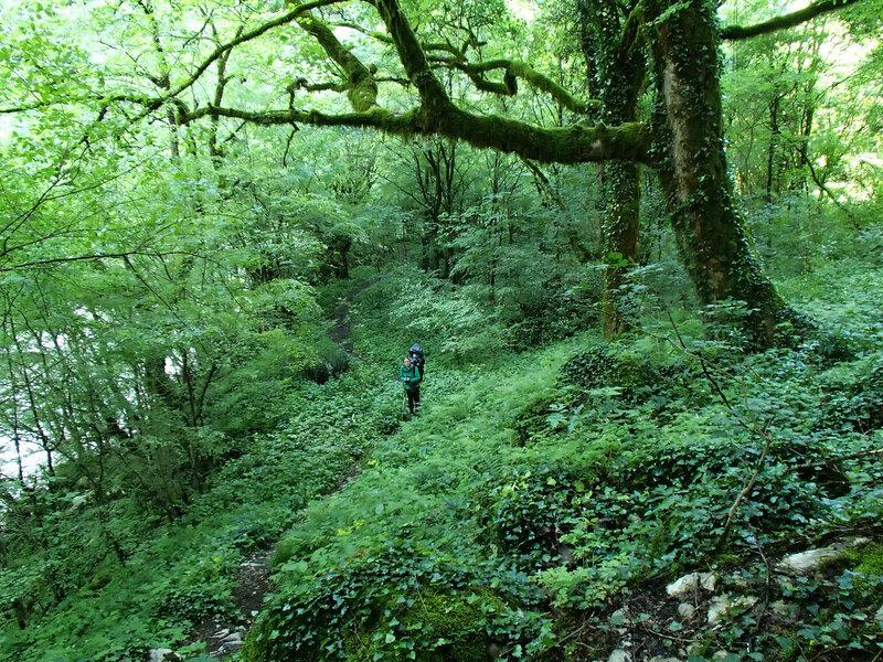 тропа в зеленом лесу по ущелью Викос (path in Vikos gorge)