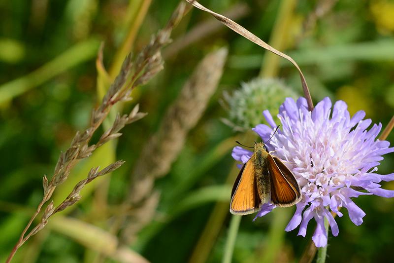 бабочки в полдень 4.jpg