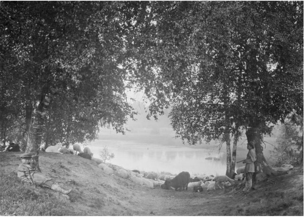 Котлы. Пастушки со стадом на реке Сума