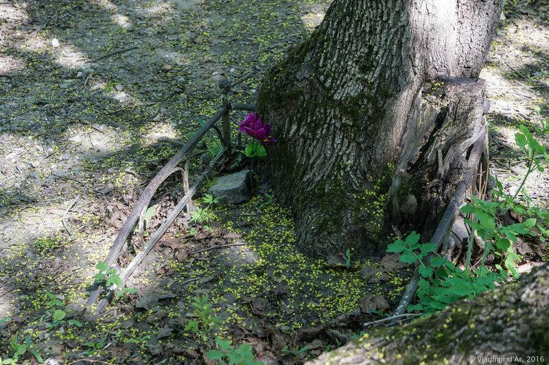 Остатки Дъяковского кладбища