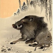 Рисунок кабана