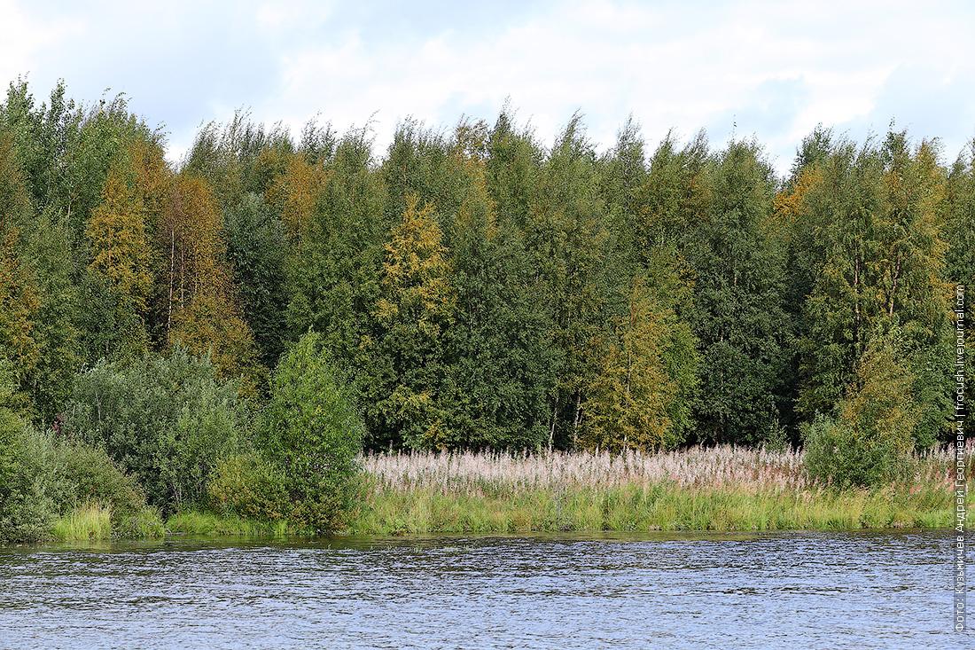 деревья по берегам Беломорканала