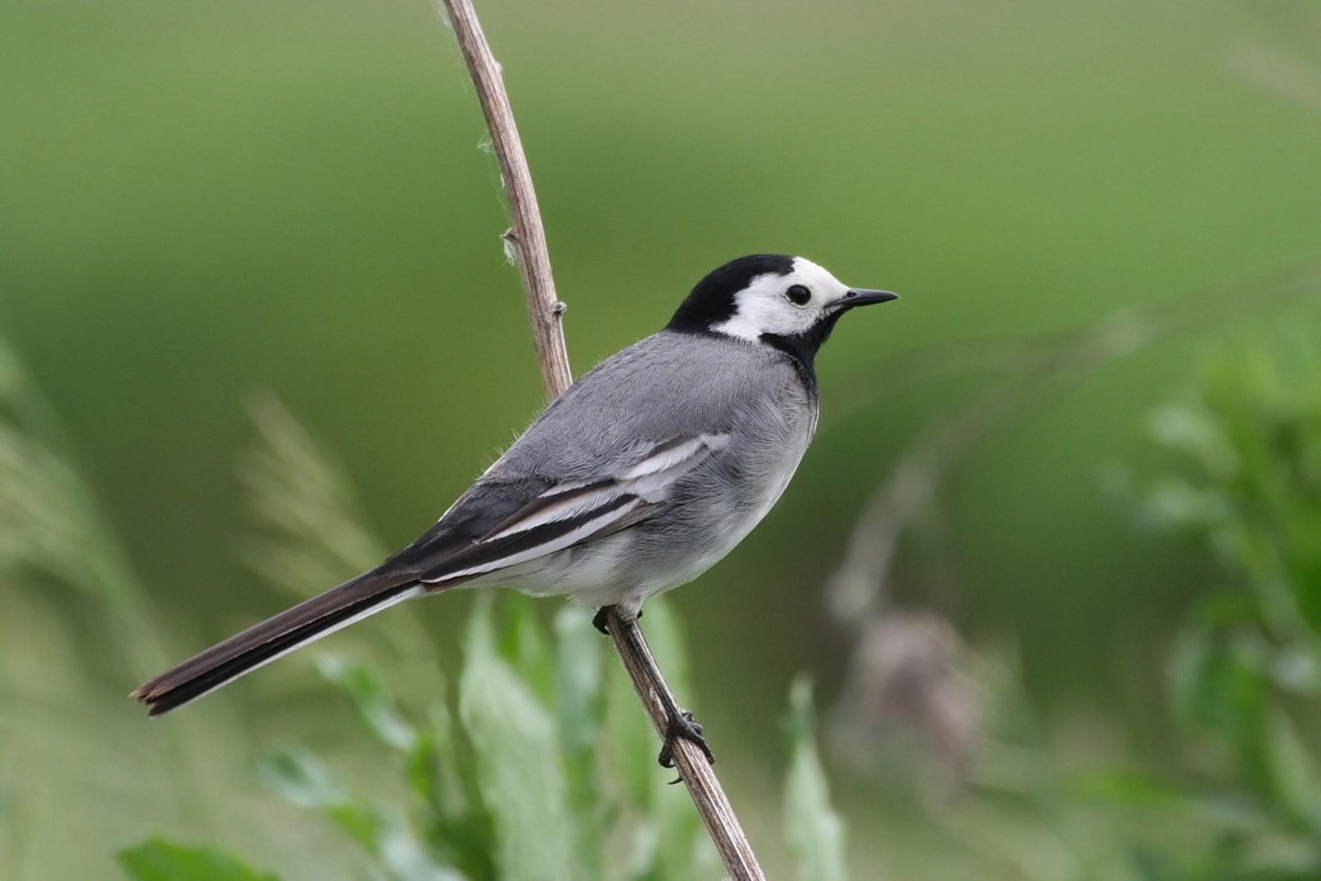 Пташка на гілці