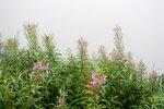 Краса в тумане.jpg