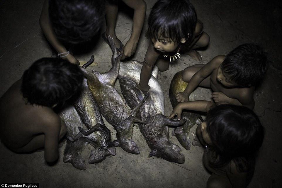 """Племя Ава окружено различными животными и каждая семья имеет по несколько """"домашних"""" питомцев."""