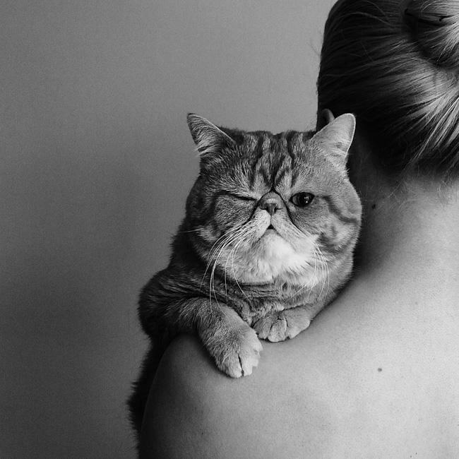 Классно примостился на плече. Автор фотографии: Елена Егорова (Elena Egorova).