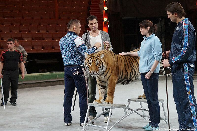 Весна. Назарова. тигры. 29.03.16.12..jpg
