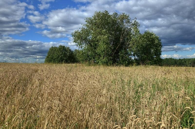 Хлебный пейзаж