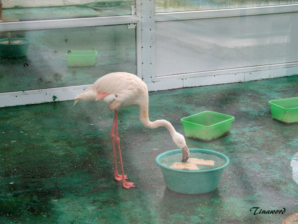 фламинго-9.jpg