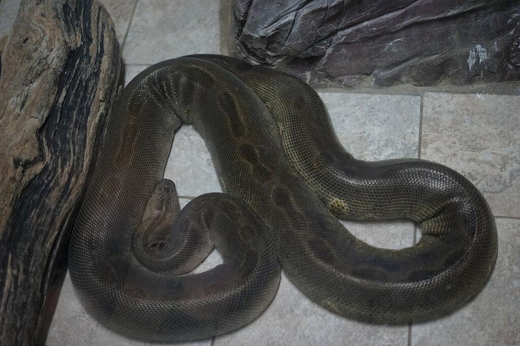 Змея. Террариум в Сафари-парке Геленджика