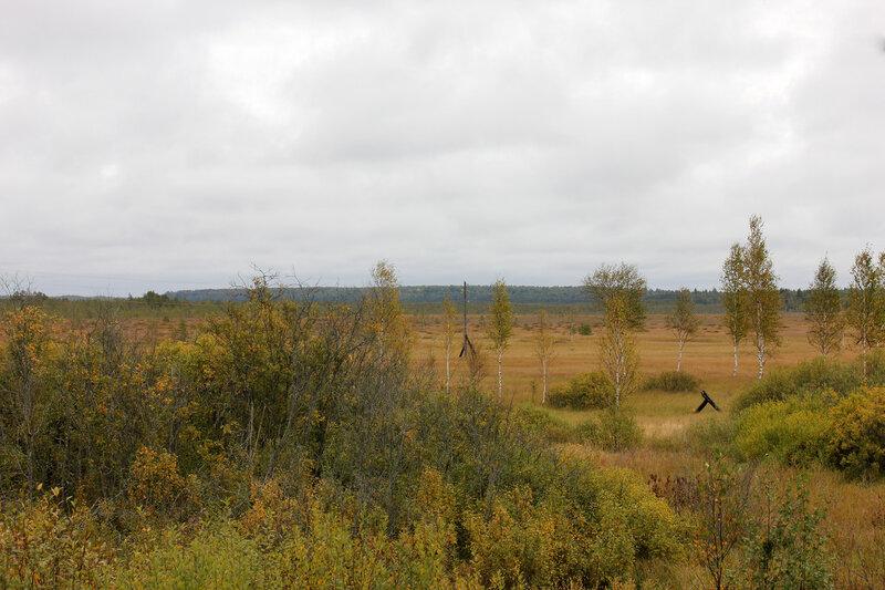 Бескрайние Тверские болота на перегоне Земцы - Подсосенка