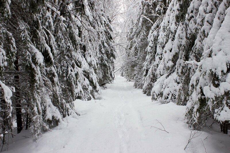 насыпь между кауштинским и форносовским болотом зимой