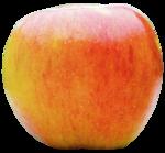 «Fruits_Village_by»  0_8a619_b395793f_S