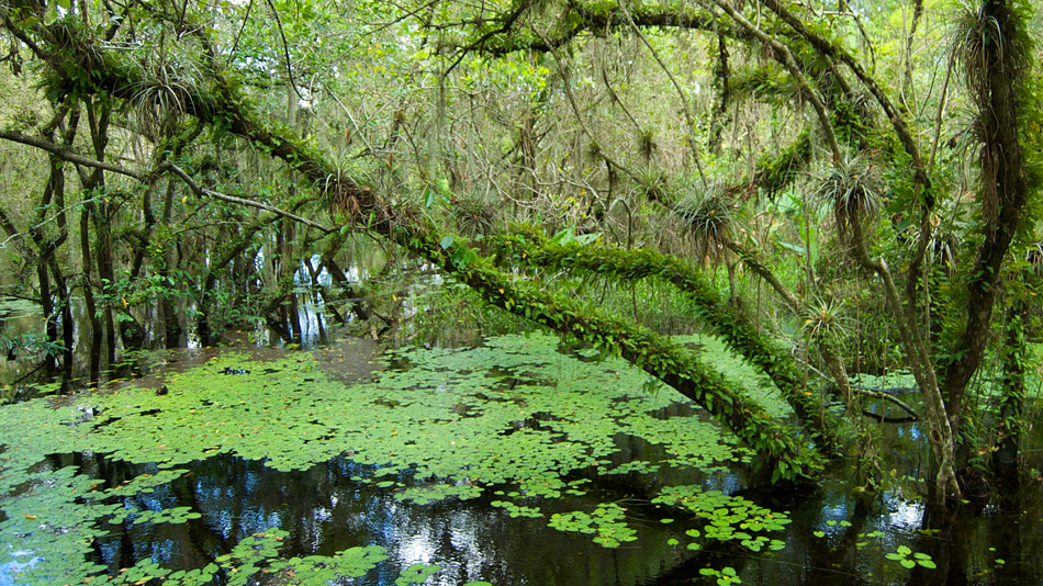 Эверглейдс – особый экорегион на юге штата Флорида, США. Здесь вы можете встретить и крокодилов, и а