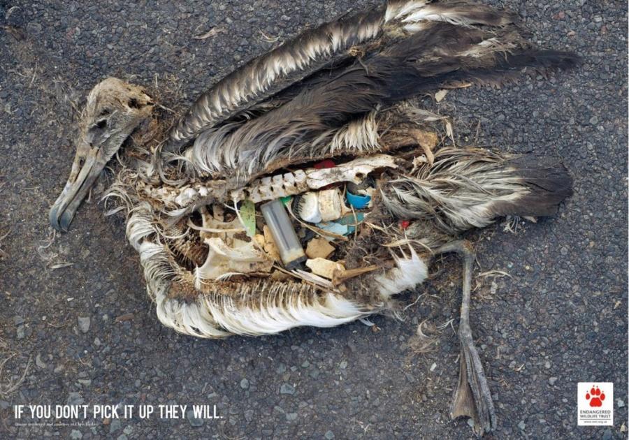 Глобальное потепление оставляет много бездомных