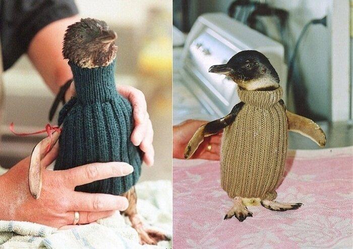 старик-вяжет-свитера-для-пингвинов3.jpg