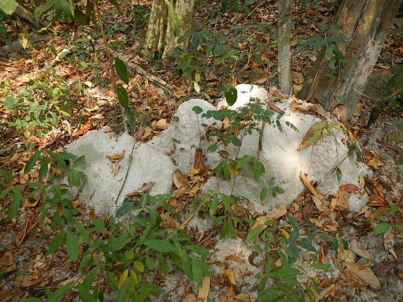 Термитник в национальном парке Namtok Sam Lan, Сарабури, Таиланд.
