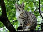P5236387 1 кошка.jpg