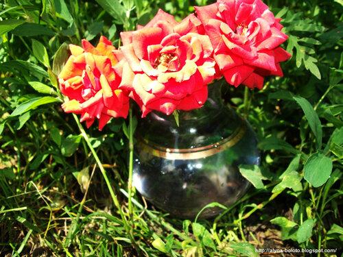 Розы в траве