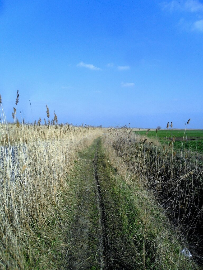 Тропа весенняя ... SAM_5834.JPG