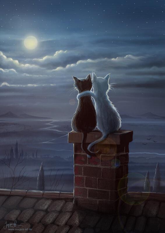 Иеремия Морелли: Что делают кошки на крыше по ночам?