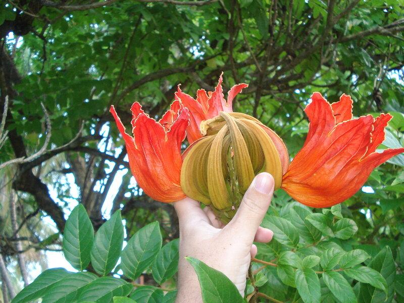 Цветок на дереве