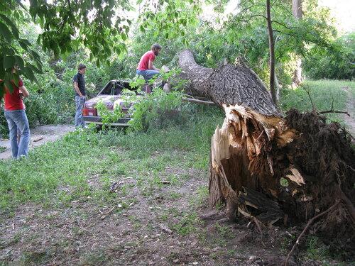 Крушение дерева об автомобиль - Курган - бар Маэстро 2