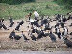 Уганда - рай для орнитолога