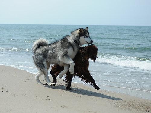 http://img-fotki.yandex.ru/get/54/malamute-akbar.38/0_2912e_b09d41bb_L.jpg