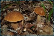 http://img-fotki.yandex.ru/get/5400/15842935.146/0_d0c80_48661be8_orig.jpg