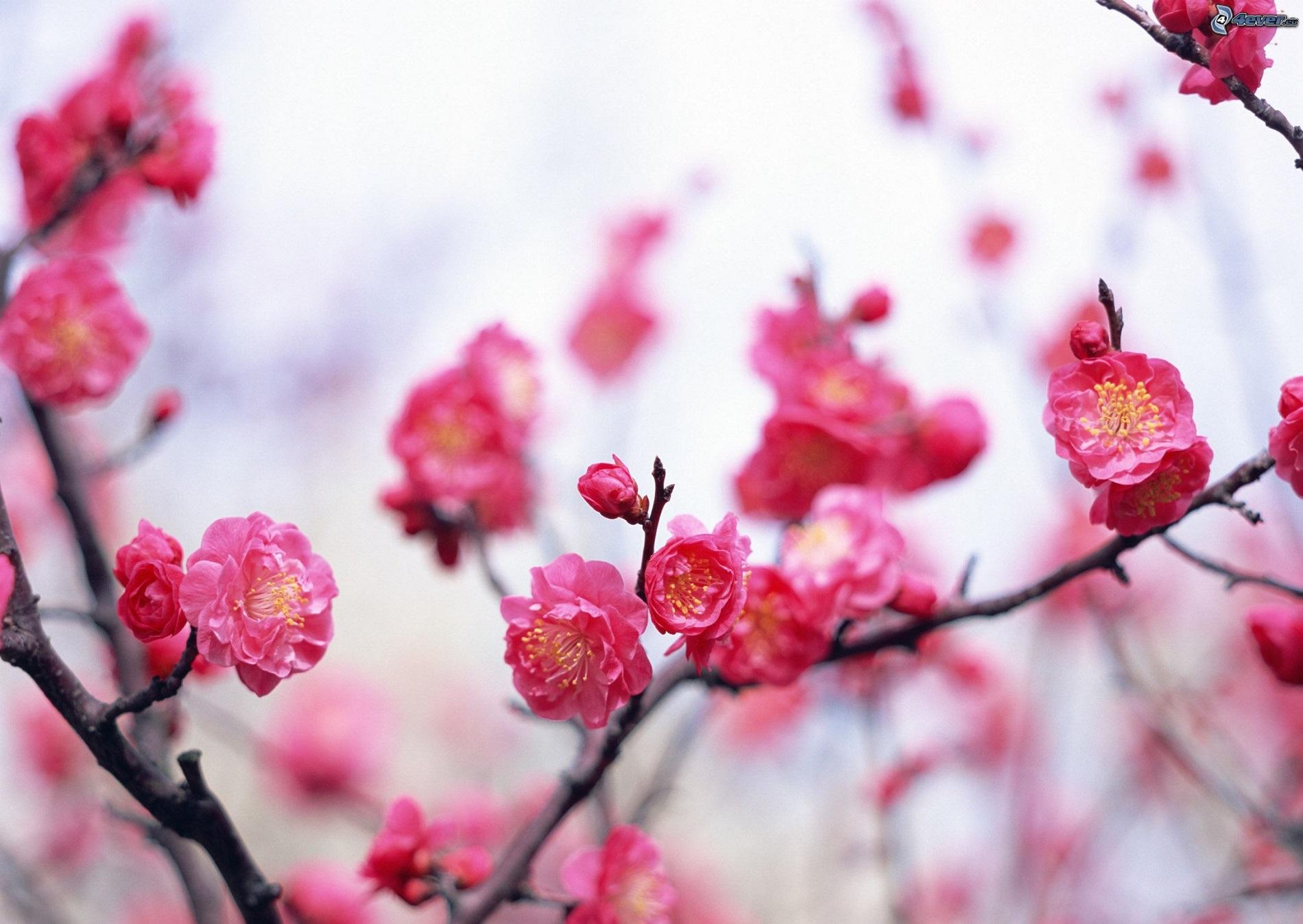 фото цветов в хорошем качестве-разрешение