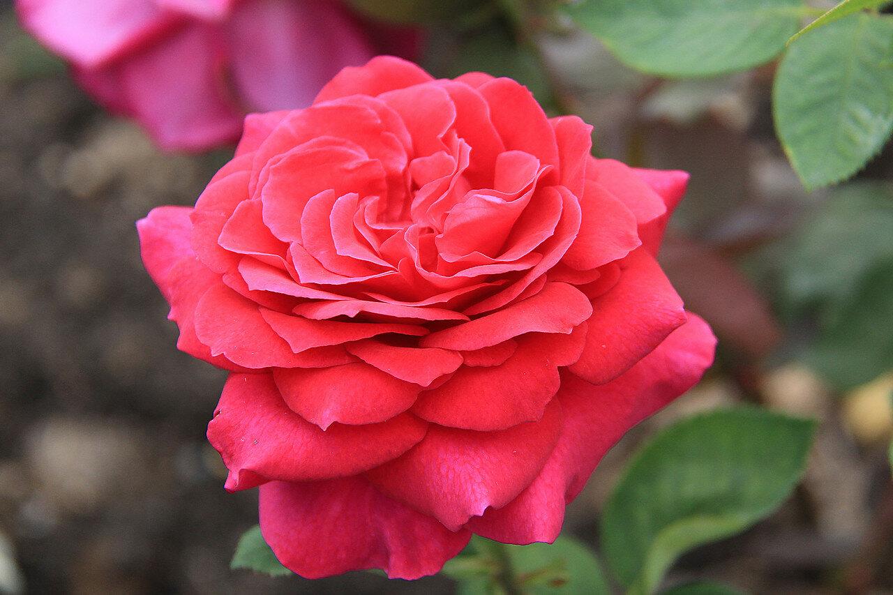 Velvet star роза купить ткани для одежды в интернет магазине
