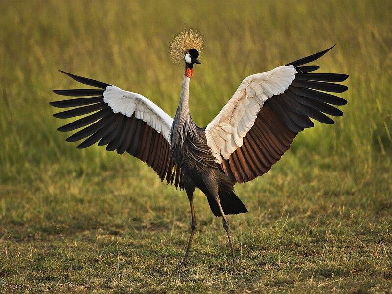 Волшебные птицы (45 отличных фото на рабочий стол) 0 312c7 26b83b67 XL