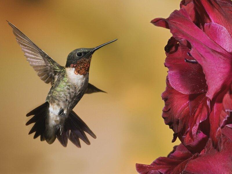Волшебные птицы (45 отличных фото на рабочий стол) 0 312ca 1dba2d6e XL