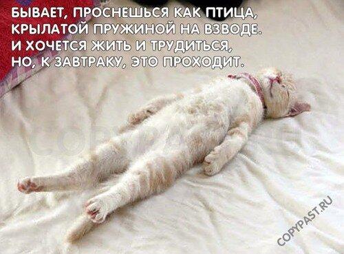 http://img-fotki.yandex.ru/get/5400/c-olia2009.d/0_3a911_797e03d8_L.jpg