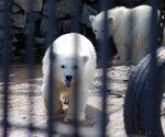 медвежатки )
