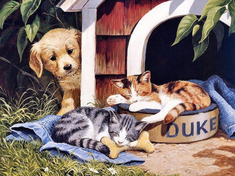 Прикольные картинки с собаками и кошками нарисованные, дне