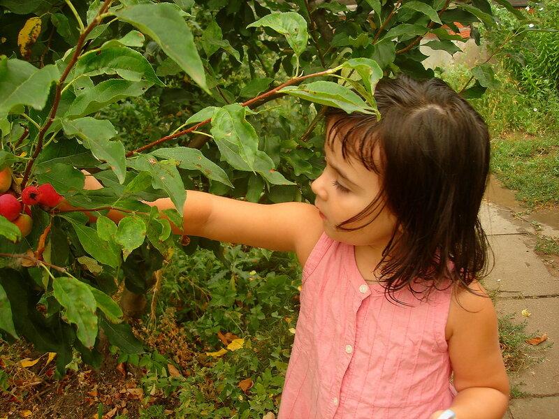 Лето,с.Остров, подворье,райский садик,август 2010