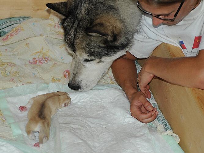 http://img-fotki.yandex.ru/get/5400/malamute-akbar.3a/0_2b125_78eccca3_XL.jp