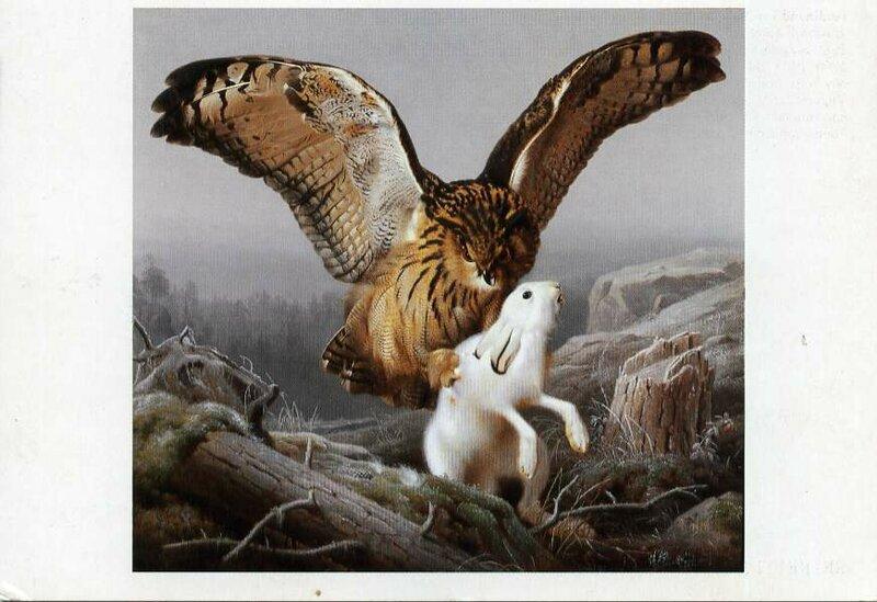 ловите сове